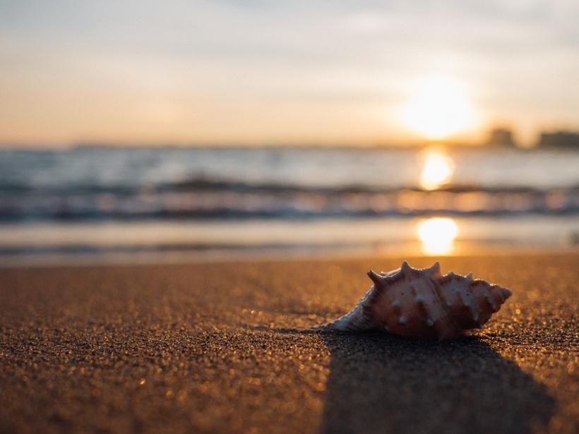 sea shell beach sunset